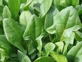 smoothie met spinazie