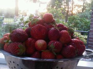 aardbeien uit de makkelijke moestuin