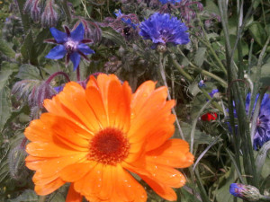 bloemensla in de makkelijke moestuin