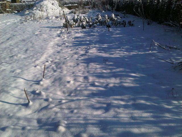 moestuin wieden in januari