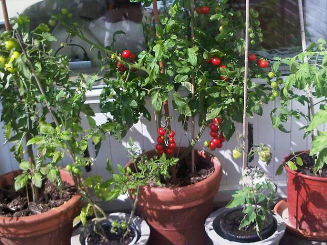 Balkon moestuinplan moestuin beginnenmoestuin beginnen - Groenten in potten op balkons ...