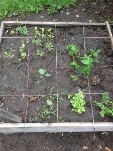 vierkantemetertuin inrichten