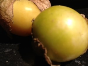Ananaskers oogsten