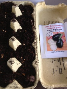 aubergines zaaien