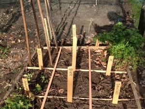 vierkante meter tuin start