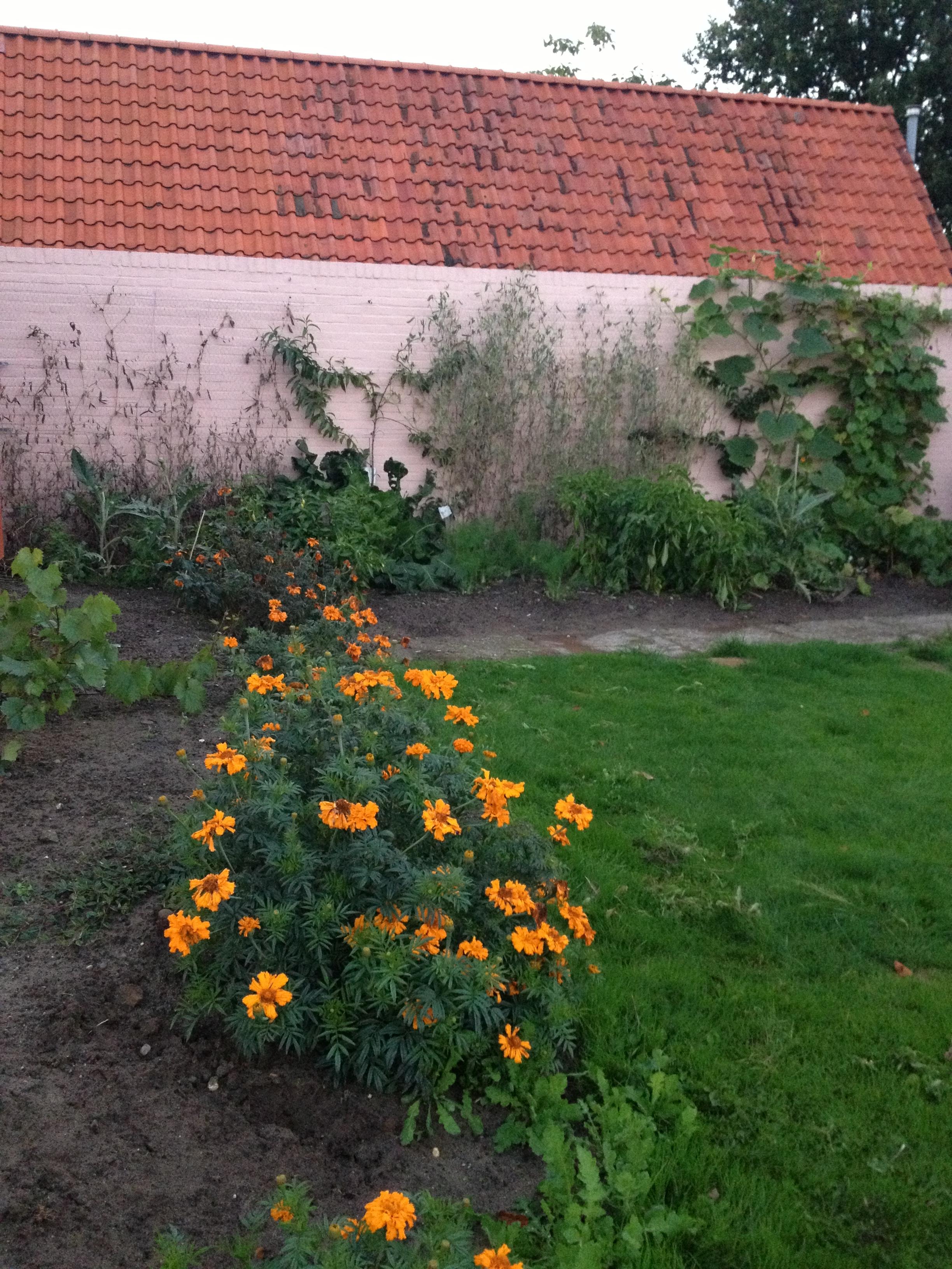 De tuinmuur als moestuin moestuin beginnenmoestuin beginnen - Hoe om te beseffen een tuin ...