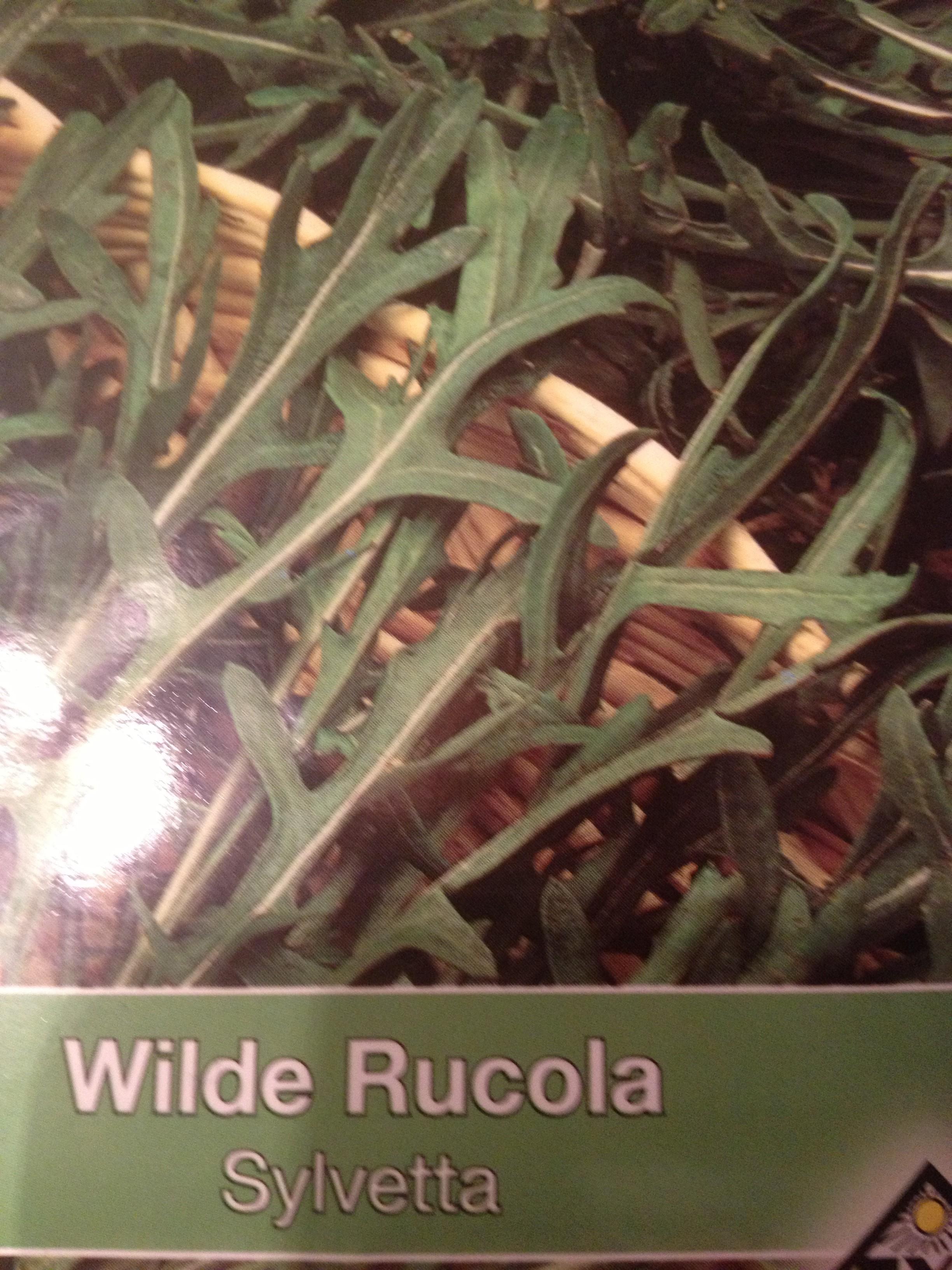 rucola wilde