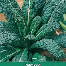 palmkool