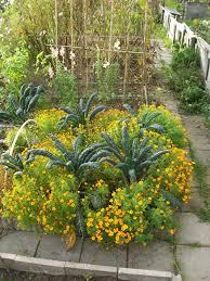 palmkool en bloemen