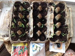 pepers, pepino en aubergine komen op