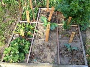 vierkantemetertuin groei en bloei