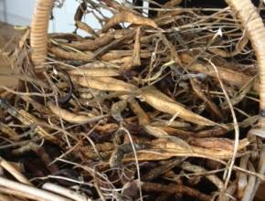 droog bonen in een mand