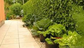 groente in potten