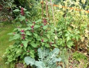 vierkante meter tuin bijplanten