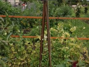 vierkante meter tuin bonen piramide