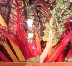 sijnbiet regenboog
