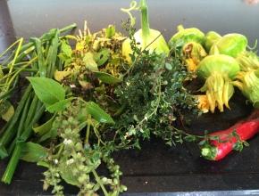 groenten oogst november