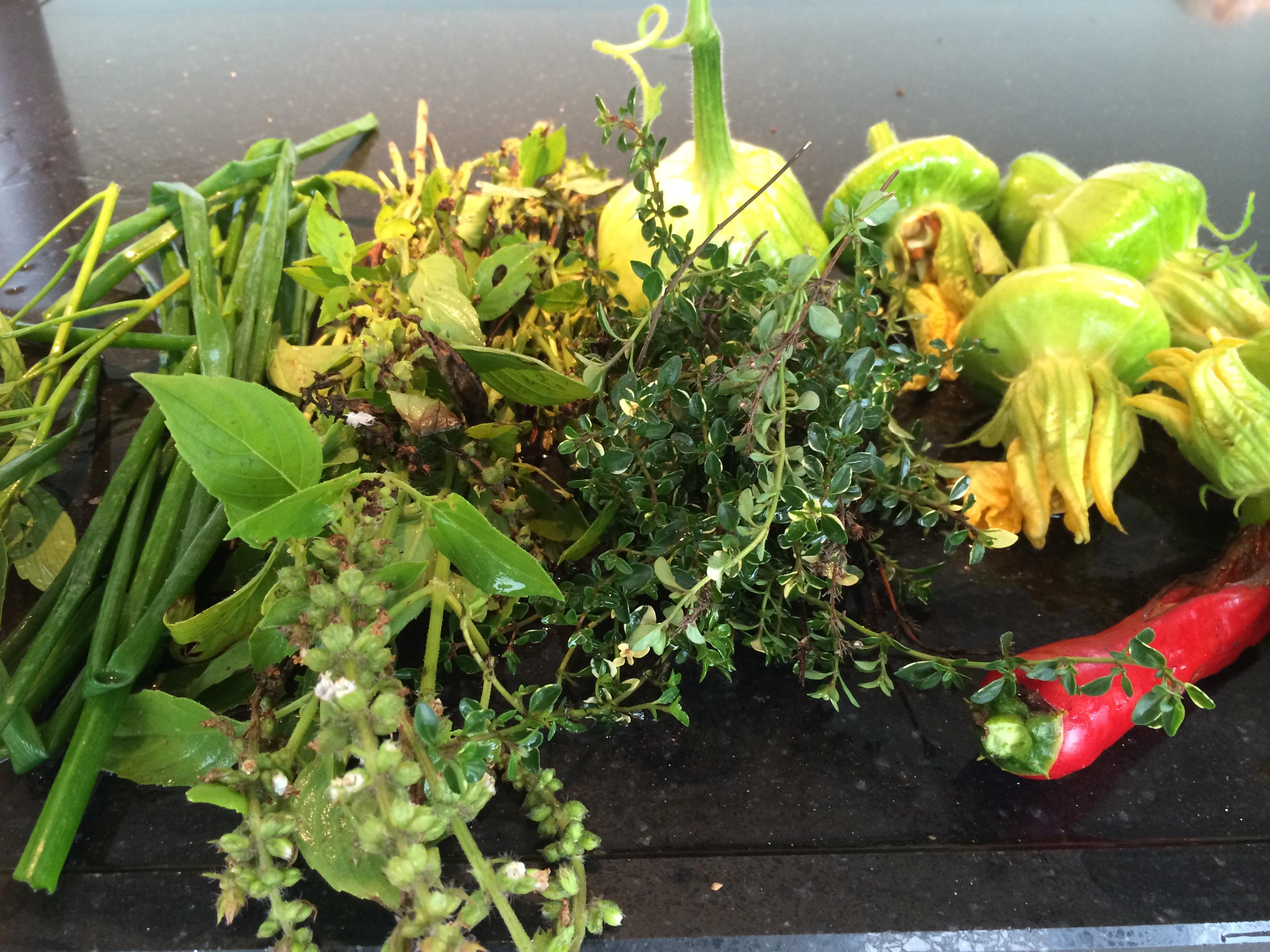 Moestuin tips augustus, genieten van die heerlijke oogst en vast ...