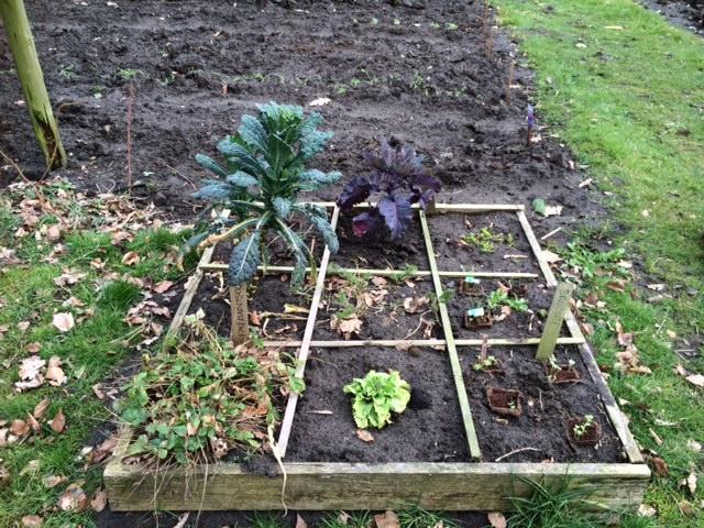 Vierkante Meter Tuin : Vierkante meter tuin moestuin beginnenmoestuin beginnen
