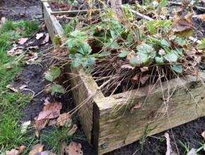 vierkante meter tuin maken