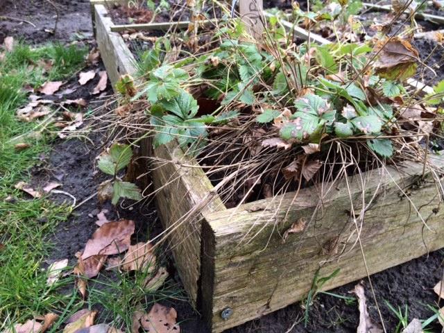 Vierkante Meter Tuin : Zo start je jouw vierkante meter moestuinbak libelle