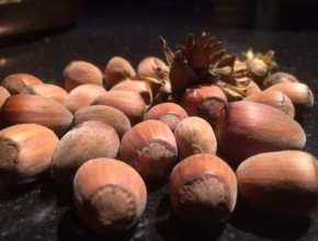 hazelnoten kweken