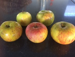 cox appelboom