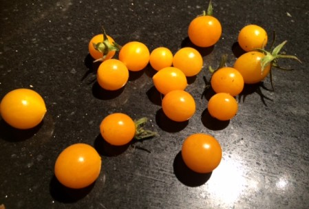 gele kers tomaat