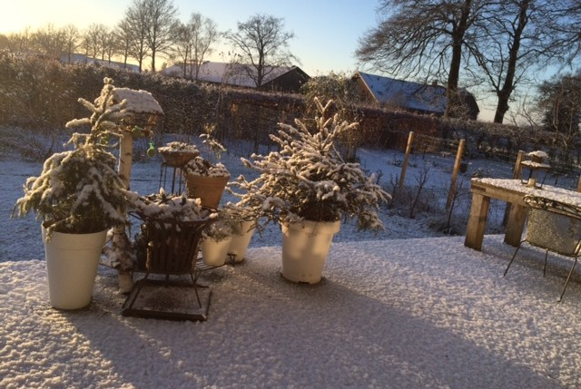sneeuw in de moestuin
