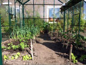 groenten in de kas