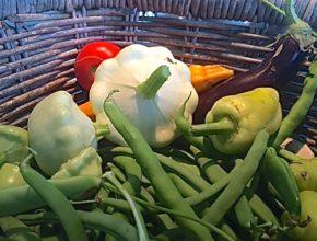 groenten oogst augustus