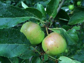 fruitbomen planten in november