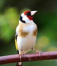 tuinvogels