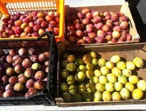 groenten en fruit bewaren