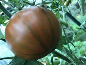 voedingswaarde coeur de boeuf tomaat